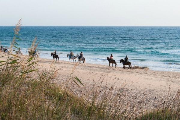 סוסים צועדים